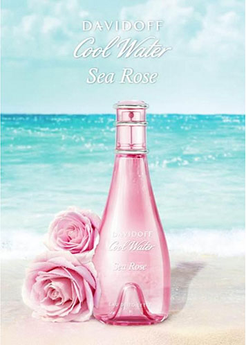 cool water sea rose